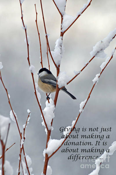Diane Berry Photograph - Winter Chickadee Giving by Diane E Berry