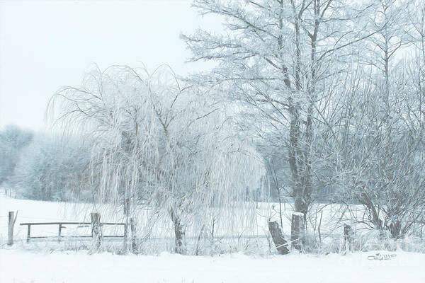 Photograph - Winter Chill by Jutta Maria Pusl