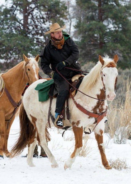 Painted Horses Photograph - Winter Cowboy by Mike Dawson