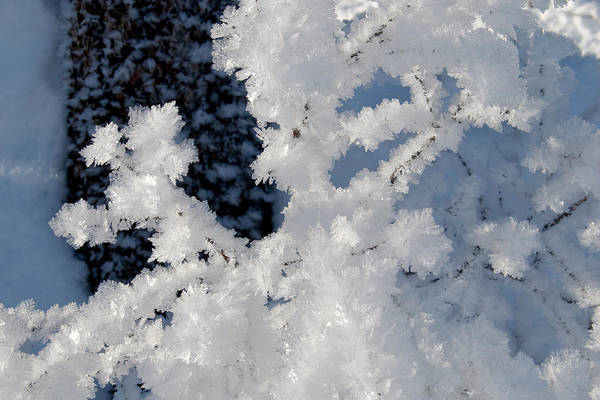 Winter Crystal Art Print