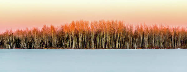 Photograph - Winter by David Wynia