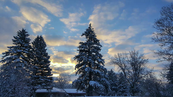 Photograph - Winter Dawn Over Spruce Trees by Lynn Hansen
