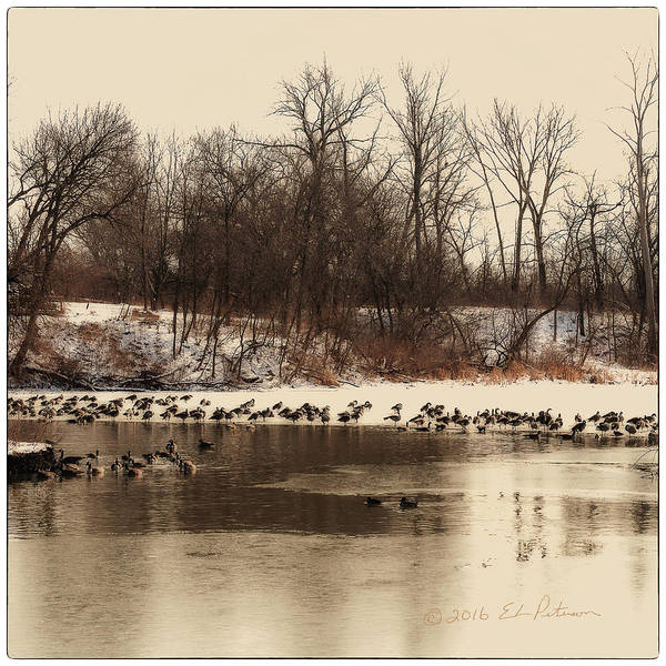 Photograph - Winter Day At Heron Heaven by Edward Peterson