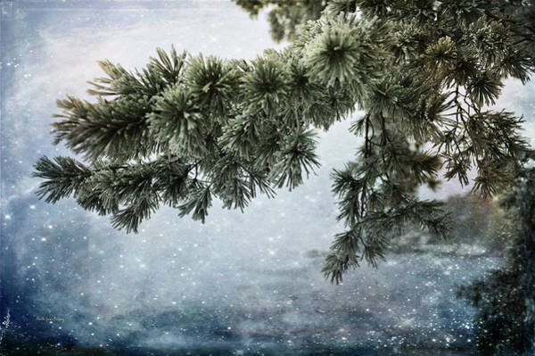 Photograph - Winter Decor by Randi Grace Nilsberg