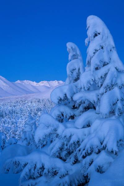 Photograph - Winter Deep by Tim Newton