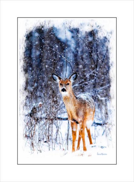 Photograph - Winter Deer 1 by Ericamaxine Price