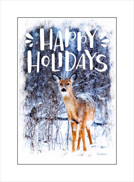 Photograph - Winter Deer by Ericamaxine Price