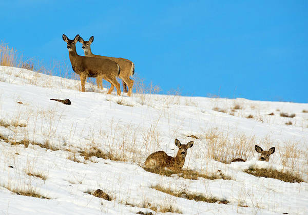 Wall Art - Photograph - Winter Deer by Mike Dawson
