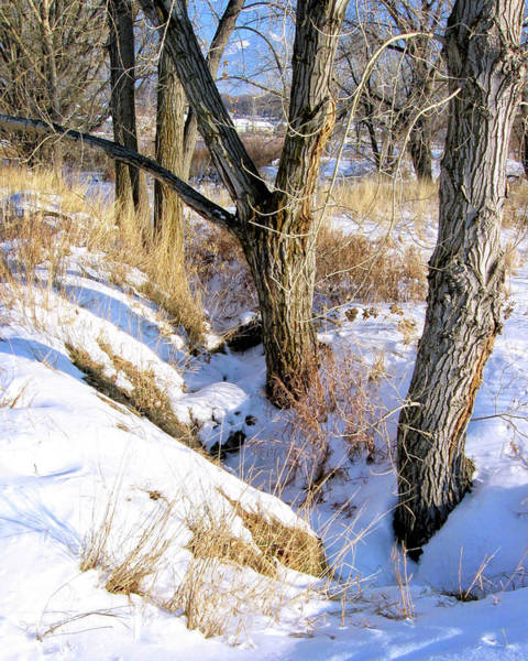 Photograph - Winter Ditch Photo by David King