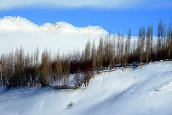 Wall Art - Photograph - Winter Dream by Robert Shahbazi