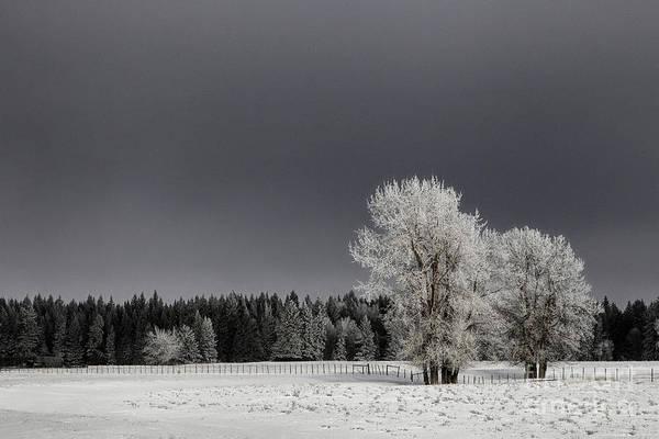 Photograph - Winter Dreamscape by Brad Allen Fine Art