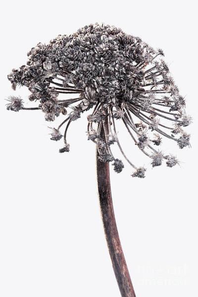 Wall Art - Photograph - Winter Dried Flowers by Masako Metz