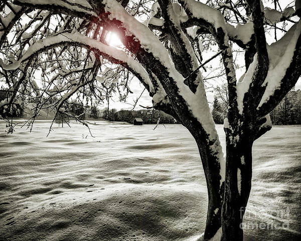 Photograph - Winter Epilogue by Edmund Nagele