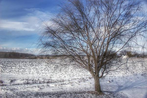 Photograph - 9003 - Winter Farm Willow Tree by Sheryl Sutter