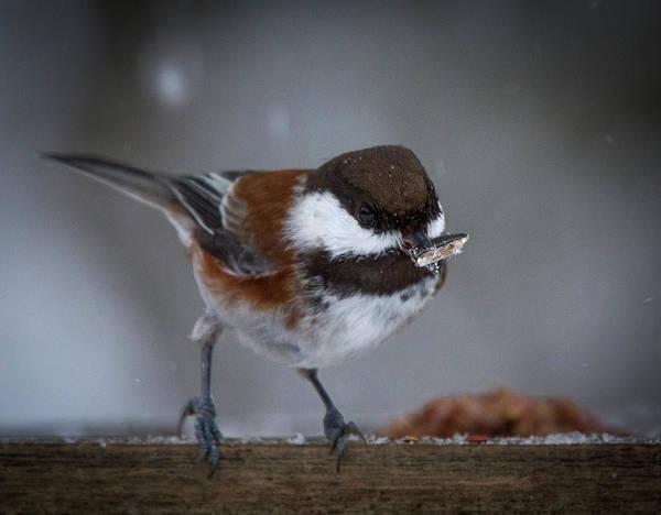 Wing Back Photograph - Winter Feast by Jean Noren