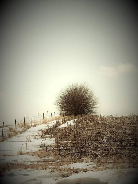Wall Art - Photograph - Winter Field by Toni Grote