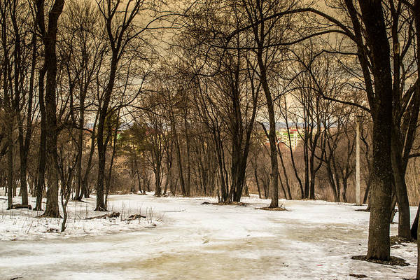 Photograph - Winter Forest And Snow by John Williams