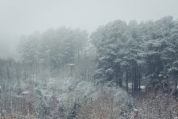 Nottingham Photograph - Winter Forest by Chris Dale
