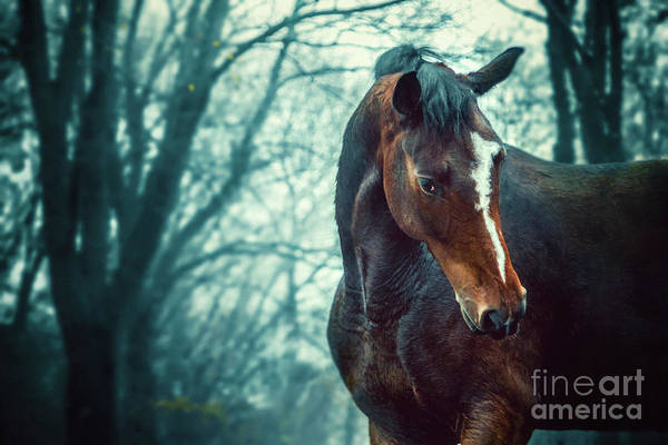 Photograph - Winter Forest Horse Portrait by Dimitar Hristov