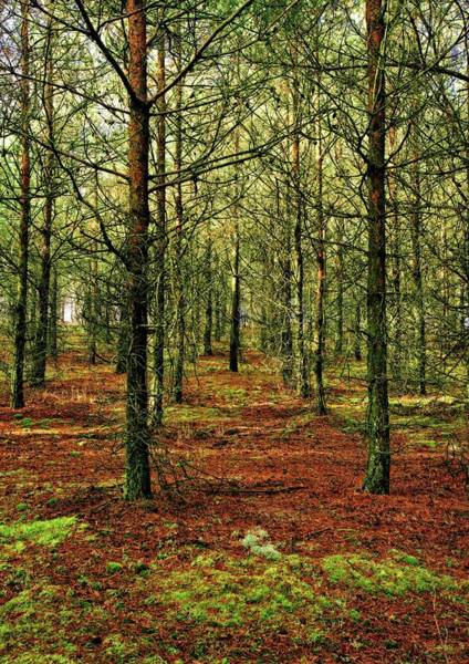 Photograph - Winter Forest by Martyn Arnold