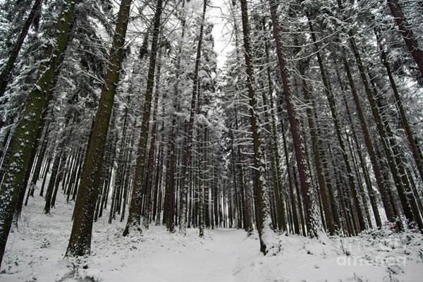 Woodland Wall Art - Photograph - Winter Forest by Michal Boubin