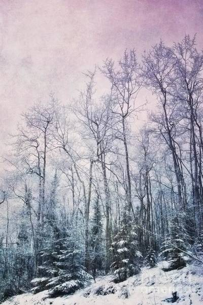 Blue Ice Photograph - Winter Forest by Priska Wettstein