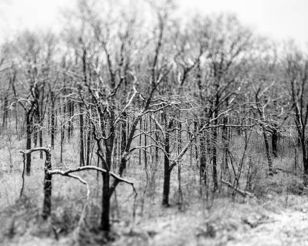 Photograph - Winter Forest by Randy Scherkenbach