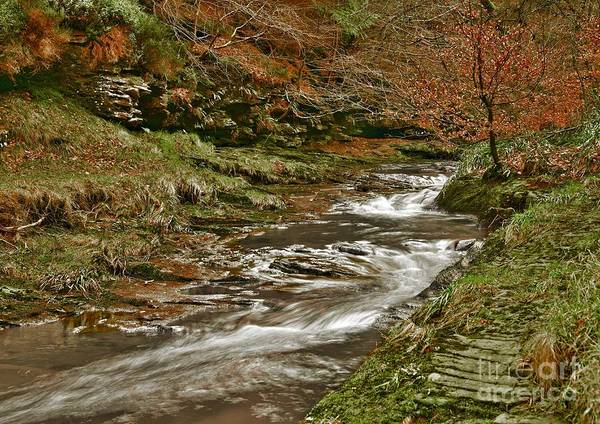 Photograph - Winter Forest Stream by Martyn Arnold