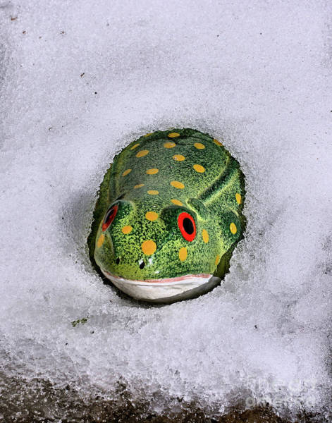 Photograph - Winter Frog by Smilin Eyes  Treasures