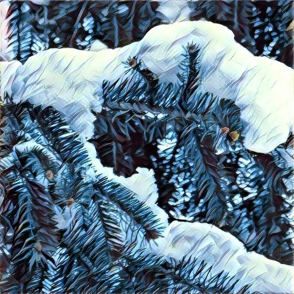Photograph - Winter Frosting by Robert Knight