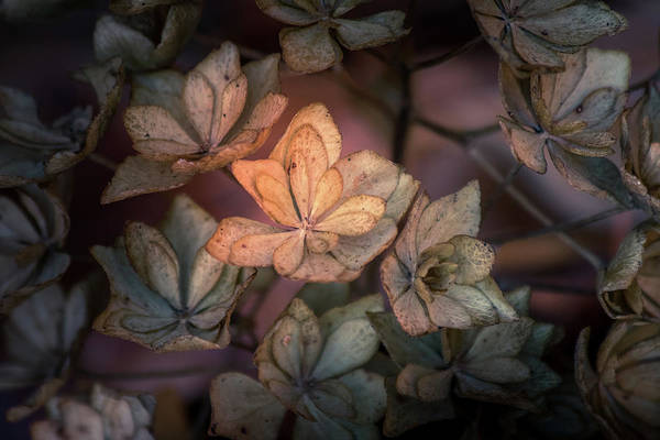 Photograph - Winter Glow by Allin Sorenson