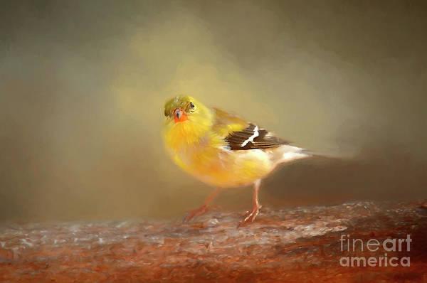 Digital Effect Photograph - Winter Goldfinch by Darren Fisher