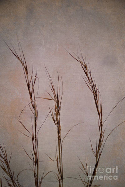 Photograph - Winter Grasses by Jemmy Archer