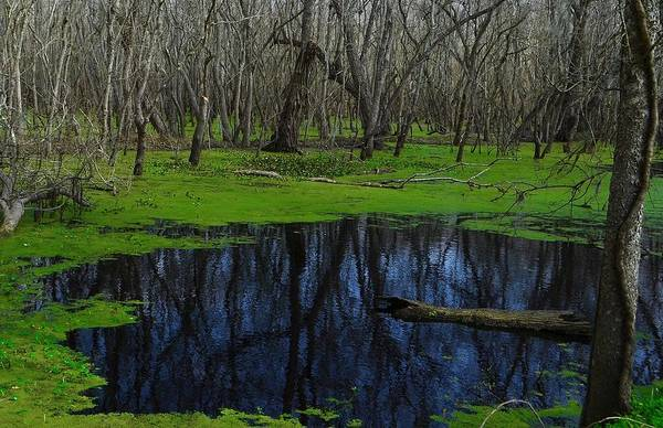 Brazos Bend State Park Wall Art - Photograph - Winter Green by Dennis Nelson