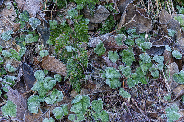 Photograph - Winter Ground Cover by Robert Potts