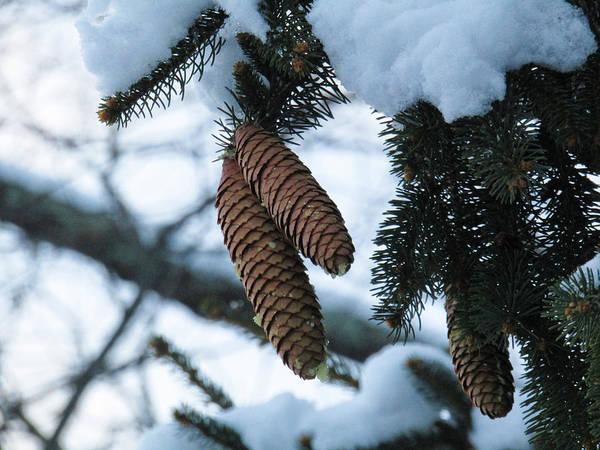 Photograph - Winter Hardy by Robert Knight