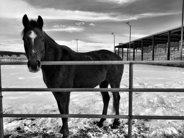 Photograph - Winter Horse by Brad Hodges