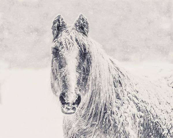 Wall Art - Photograph - Winter Horse by Debi Bishop