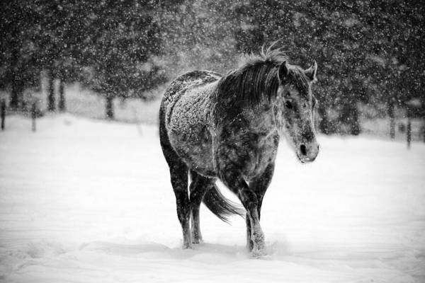 Bailey Photograph - Winter Horse by Mark Courage