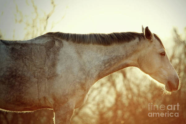 Photograph - Winter Horse On The Sunset Sky by Dimitar Hristov