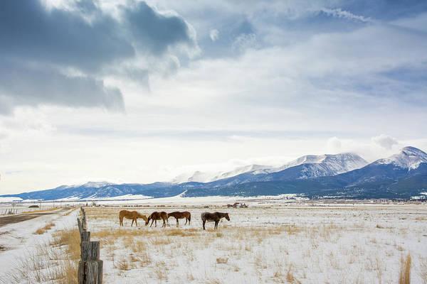 Westcliffe Photograph - Winter Horses by John Bartelt
