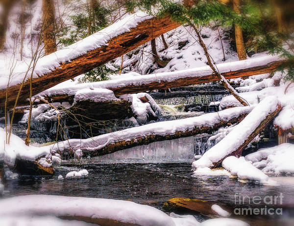 Photograph - Winter Ice by Nick Zelinsky