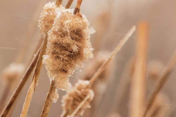 Photograph - Winter Ice by Tyson Kinnison