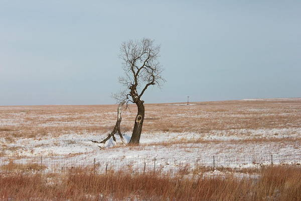 Photograph - Winter In Kansas by John Moyer