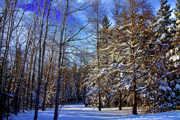Aroostook County Photograph - Winter In Maine by Gary Smith