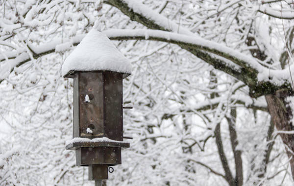 Wall Art - Photograph - Winter In Spring Bird Feeder by Keith Mucha