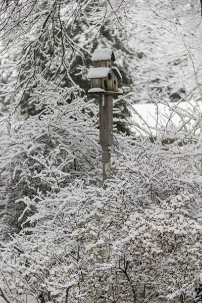 Wall Art - Photograph - Winter In Spring Birdhouse 5 by Keith Mucha