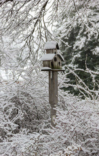 Wall Art - Photograph - Winter In Spring Birdhouse 6 by Keith Mucha