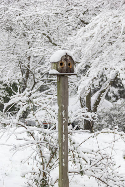 Wall Art - Photograph - Winter In Spring Birdhouse  by Keith Mucha