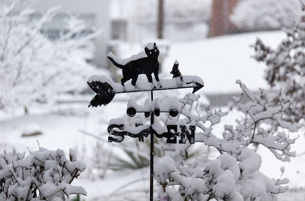 Wall Art - Photograph - Winter In Spring Cat Weathervane by Keith Mucha